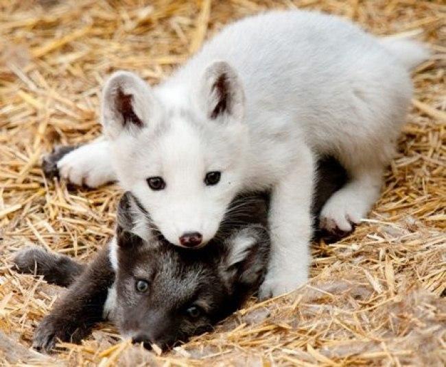 2hlaTOWr4FU - Самые милые примеры дружбы у зверят