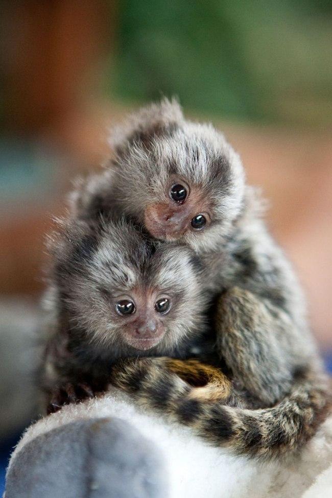 v2jnZ1eK0go - Самые милые примеры дружбы у зверят