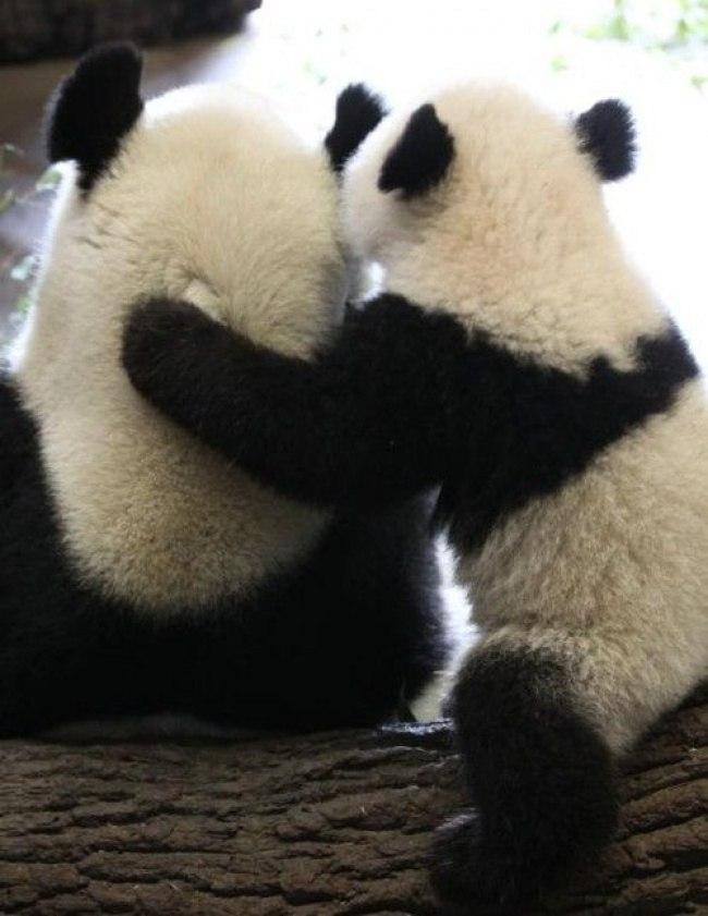 Qp WzhoDuc8 - Самые милые примеры дружбы у зверят