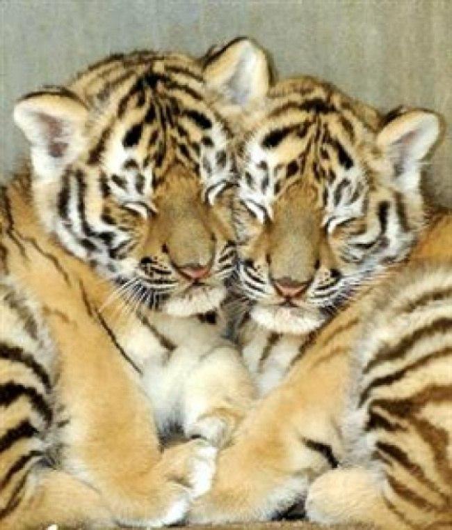 u9xWNOKJ7L0 - Самые милые примеры дружбы у зверят