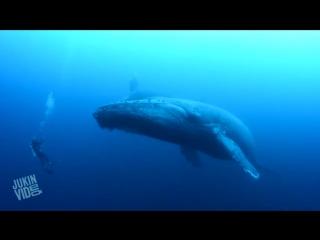 Дайвинг с китами