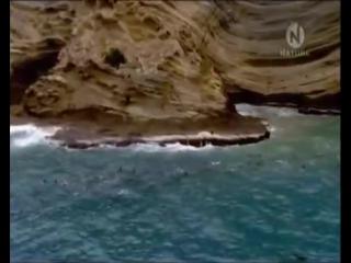 Классный фильм о китах. Большой синий кит. Документальные фильмы National Geographic