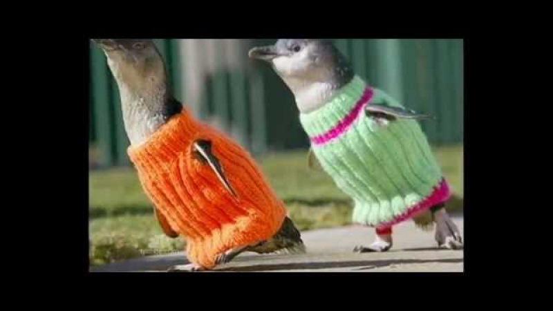 The Penguins New Clothes - NBC News - 10/22/2011