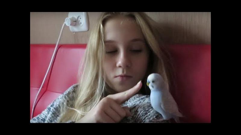 Vlog Пять минут ми-ми-мишности🐼Джесси, Тоша, Маша и Я Животные