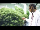 Wiz Khalifa DayToday The Right Track