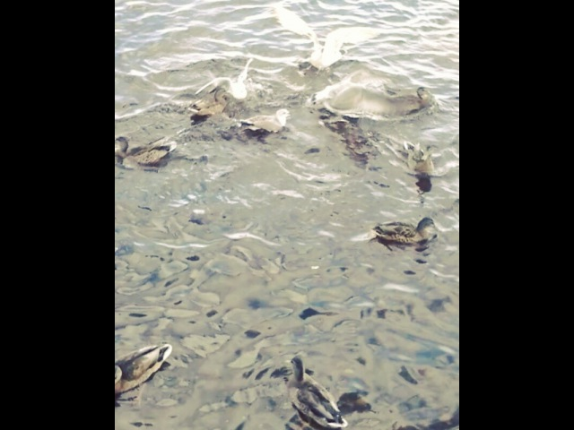 Laeti atenais video