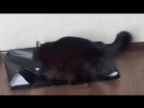 Кошка шушуть ебанулась))0