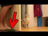 Кошка и огурец: она не боится!