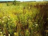 Травы да цветы-Ветер