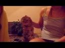 Прикольное видео про кошек 2016