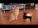 Самый спокойный кот и собачка