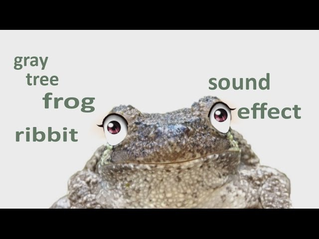 The Animal Sounds: Gray Tree Frog Ribbit - Sound Effect - Animation