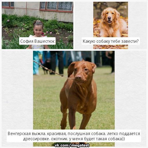 Фото №399314767 со страницы Софии Вашестюк