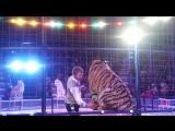 Белые бенгальские тигры,привезённые из Индий,белые львы,привезённые из южной Африки и амурские тигры.