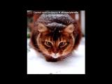 «Со стены Без кота и жизнь не та ツ» под музыку  на хлеб намажу масла -  ама ама хасла ама ама хасла. Picrolla