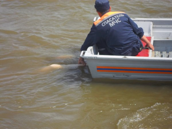 Недалеко от Таганрога в пруду утонул мужчина