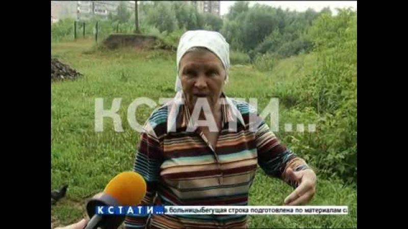 Спасатели леса загубили городской памятник природы - бобры разбушевались в Кстовском районе.