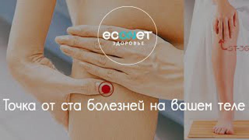 ТОЧКА ДОЛГОЛЕТИЯ: точка от 100 БОЛЕЗНЕЙ на вашем теле   econet. ru