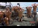 Американские морпехи на коленях US Marines on his knees