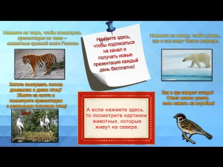Презентация на тему Австралия. Презентация для 4, 5, 6, 7 класса