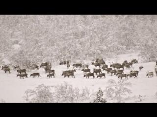 Поездка в тундру: к оленям и оленеводам!