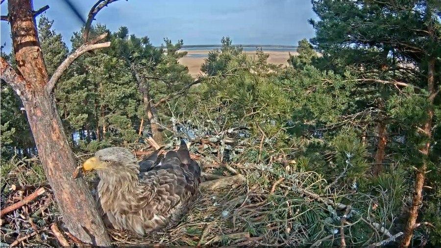 Фауна Крыма wildlife.crimea.ua