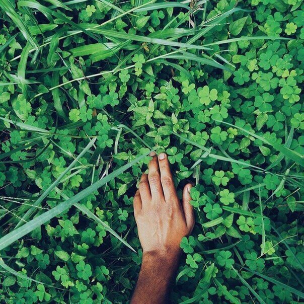 красиво рука трава