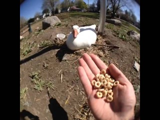 Quacks me up that cheerios can't even cheer this guy up pt 2: Curtis Lepore's Vine #34