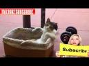 Faze Comice - 11 Minute de Comedie cu Pisici 2015 Razi de Mori || Fail16Hz