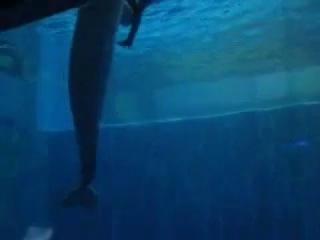 Дельфин и человек плавают вместе