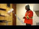 Funny video, WTF, Parrot sends fuc* HD. Прикол! Попугай матерится!) || Funny Any