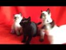 """""""Синхронные"""" котята."""