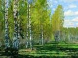 Прогулка по летнему лесу. Чудесное пение птиц.
