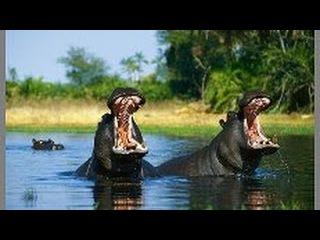 Путешествие по реке. Нил - самая длинная река.  Документальный фильм. National Geographic.