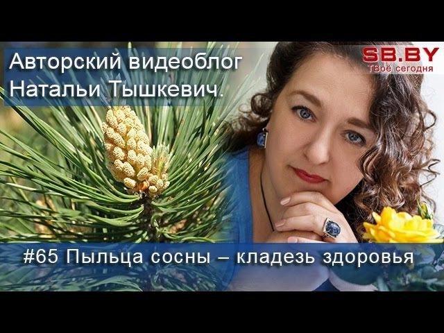 Пыльца сосны - сбор, применение, полезные свойства