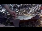 Экспериментатор. Как быстро почистить рыбу