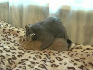 производство котокролов :) секс кота и кролика, забавные коты и кролики, прикол с ...