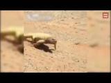 Así se caliente está el Desierto de Arabia Saudita