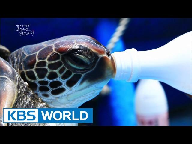 Korean Geographic | 코리언 지오그래픽 - Ep.8 Female Divers (2014.12.24)