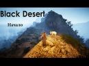 Стрим: Black Desert Online Почти самое начало на PTP сервере (Волшебница)