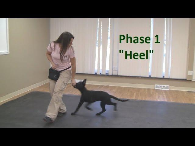 How to Train a Dog to Heel (K9-1.com)