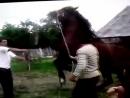 Настоящая_цыганская_лошадь!