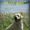 """Питомник  лабрадоров ретриверов  """"Just Lab"""""""