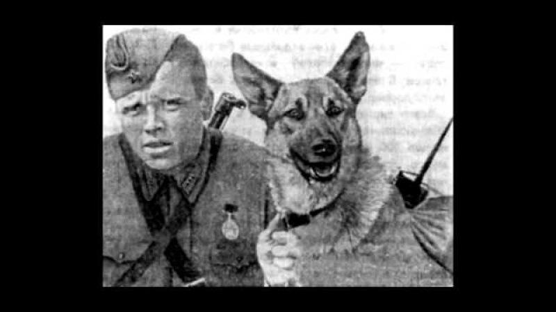 песня охотника про собаку