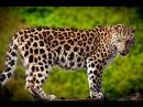 Необычное Поведение Животных — Звериные Причуды (Документальные фильмы HD)