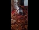 мой кот - придурок