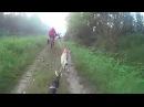 Just a little bit of bikejoring (Czechoslovakian Wolfdog)