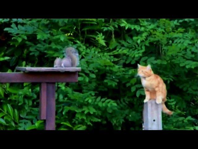 Wiewiórka ninja w akcji z kotem (SZYMONER)