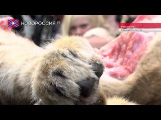Лента Новостей на
