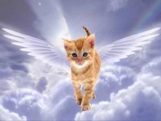 А вам спасала кошка когда-нибудь жизнь ? 10 КОТОВ и КОШЕК СПАСШИХ ЖИЗНЬ ИХ ХОЗЯЕВАМ